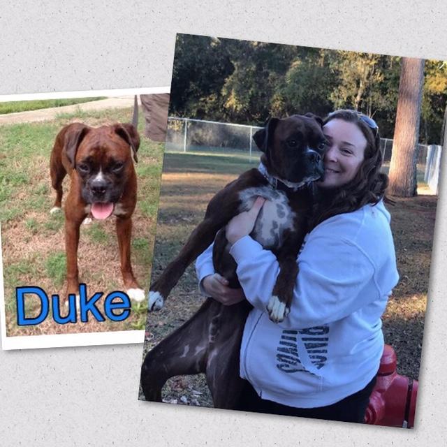 Duke Adoption #2 11-19-16