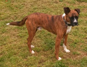 Roman RE Adopted 123014