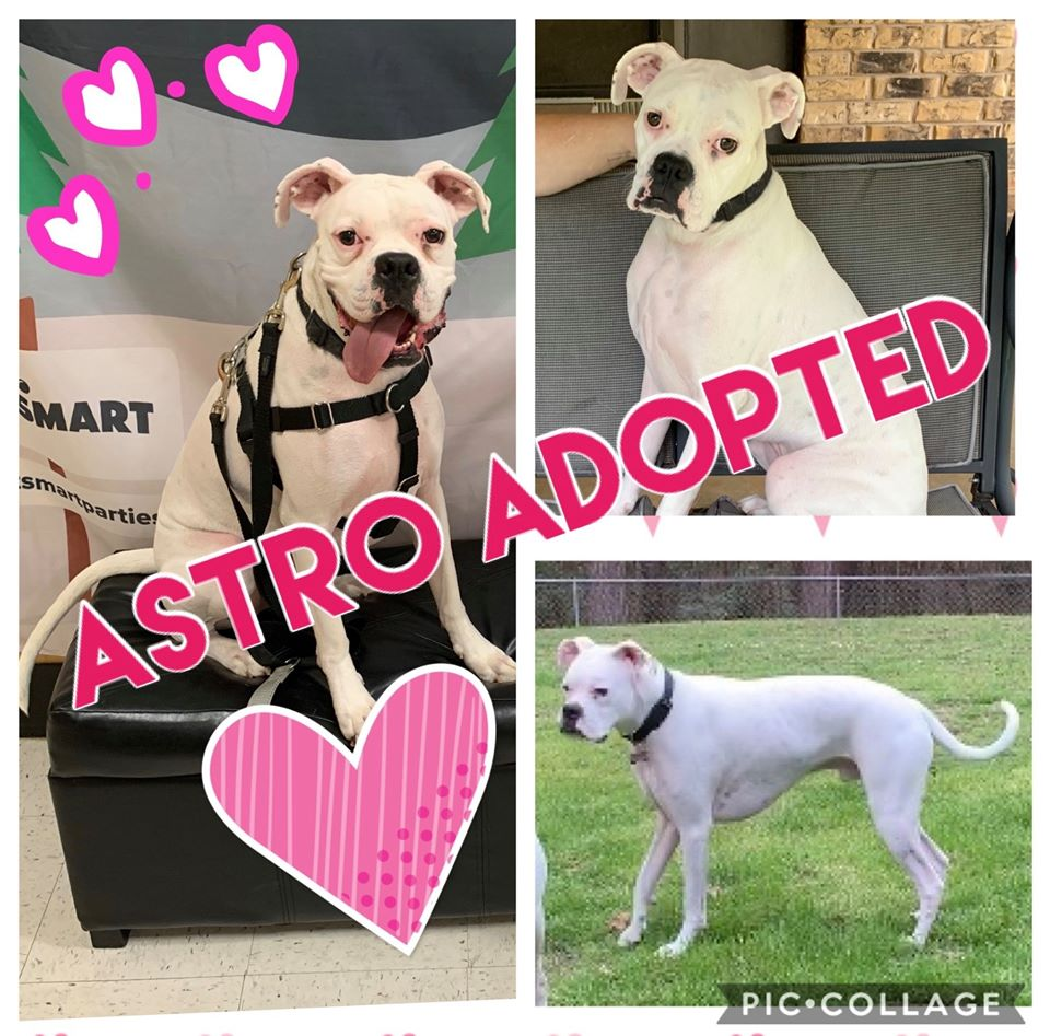 Astro Adopted 2-14-20